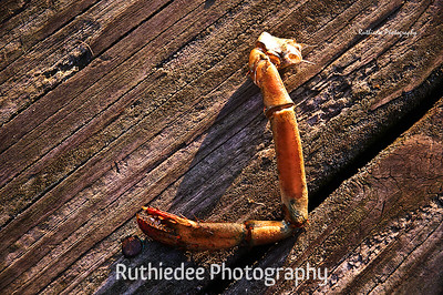 Crab claw on the dock...