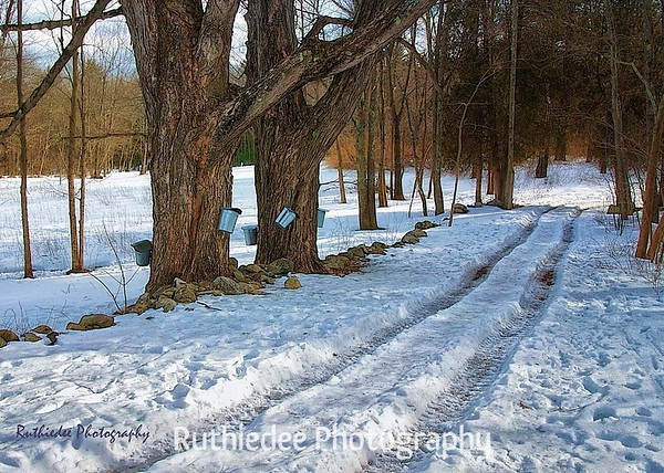 Maple Sugar trail...