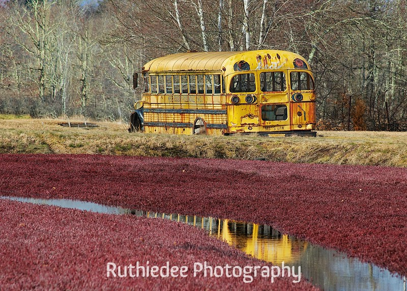 old bus in a bog 5.jpg