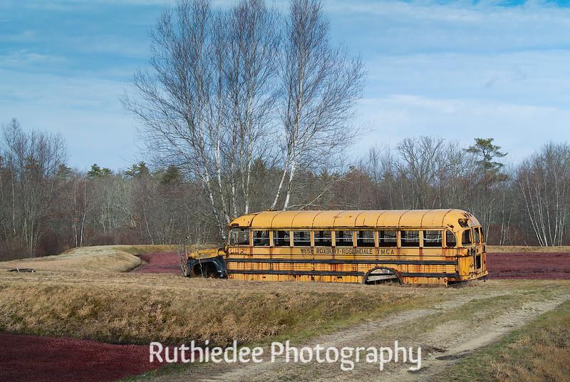 old bus in a bog 4_1.jpg