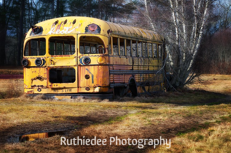 old bus in a bog 10.jpg