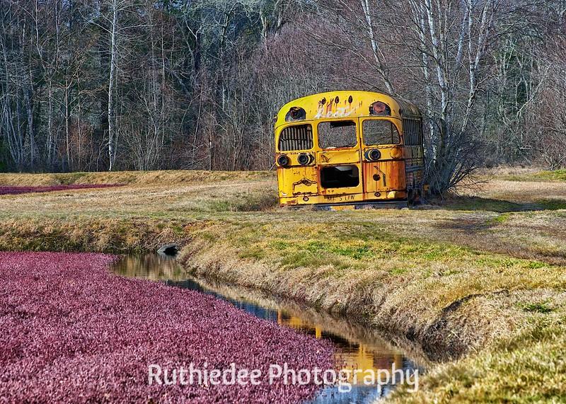 old bus in a bog 8.jpg