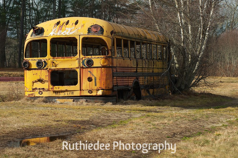old bus in a bog 13.jpg