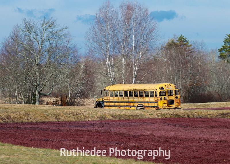 old bus in a bog 13_1.jpg
