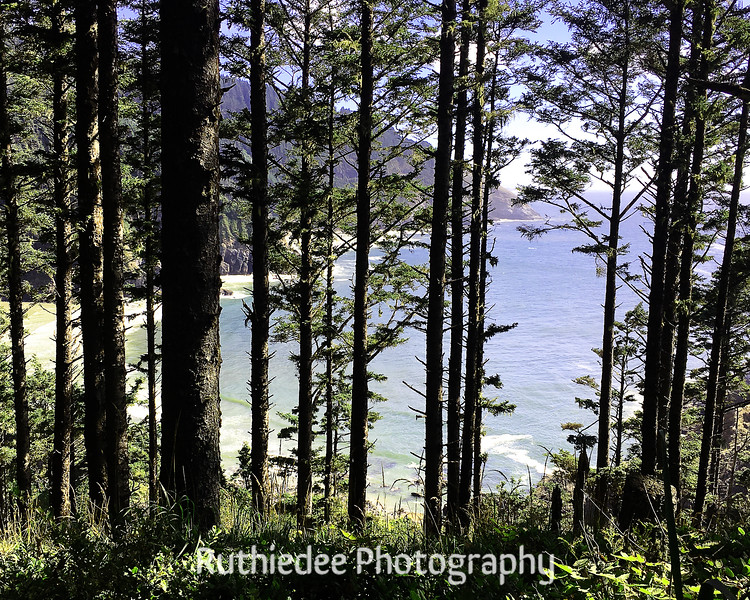 ocean through trees.jpg