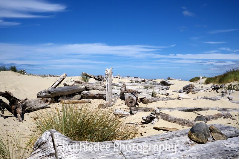logs on dunes.jpg