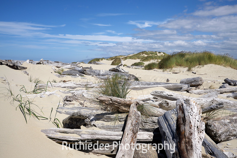 dune logs2.jpg