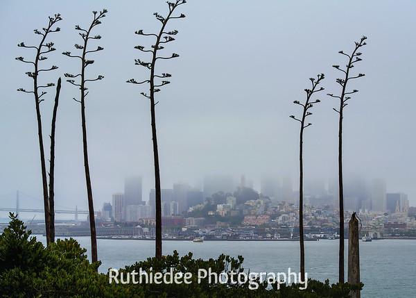 San Francisco from Alcaraz...