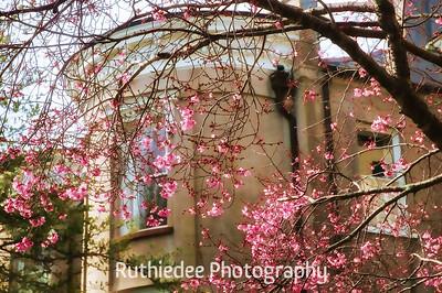 February flowers...