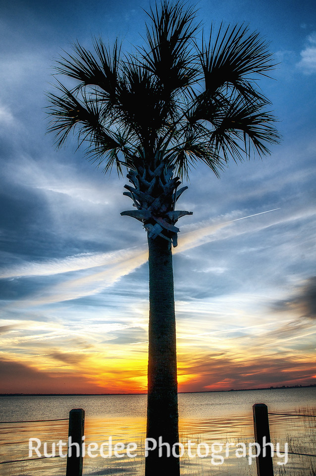 Palm in the sunset...