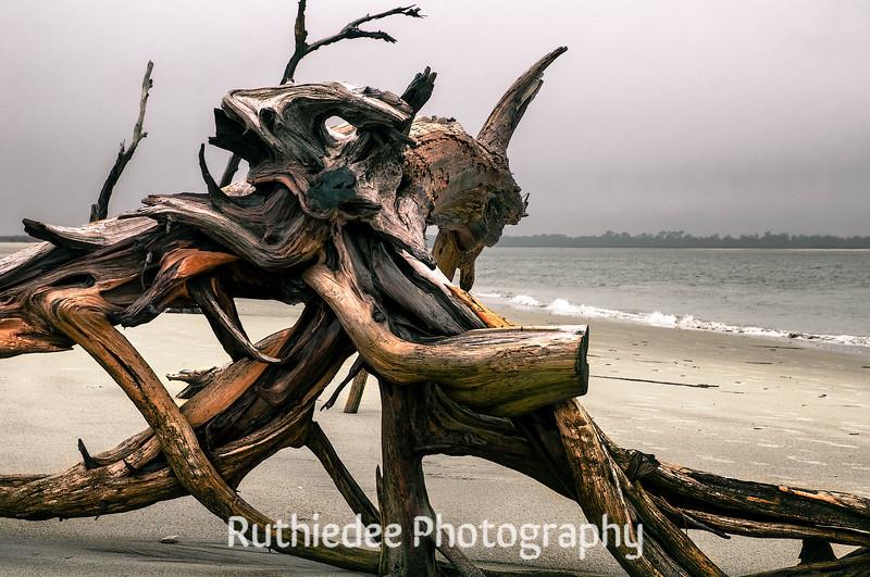 Nature's art on Folly Beach...