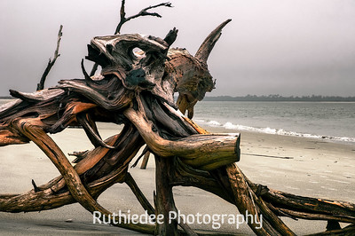 Nature's art on Folly Beach...