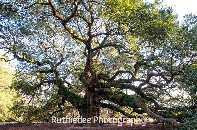 The Angel oak...
