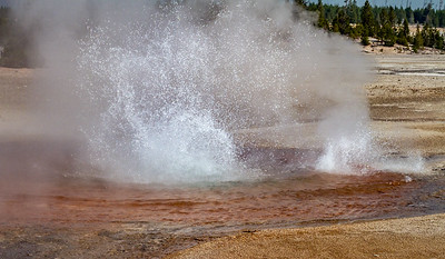 Whirligig Geyser, Norris Geyser Basin