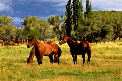 3 Horses in a Field  Bishop California