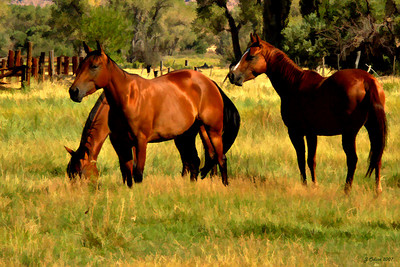 High Sierra Horses  Bishop CA...A freind suggested I crop my horse image down to just the horses...I liked her idea, so this is the result...:-)
