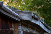 Cactus Growing on the Roof of this Log Cabin - Nevada City Montana - Photo by Cindy Bonish