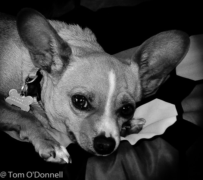 Gracie the desert dog accompanies me often.  She loves people. She might be at the studio.