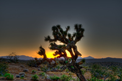 All alone in the desert at sunset.