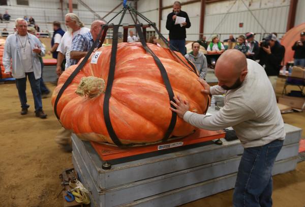 Giant Pumpkin 2016