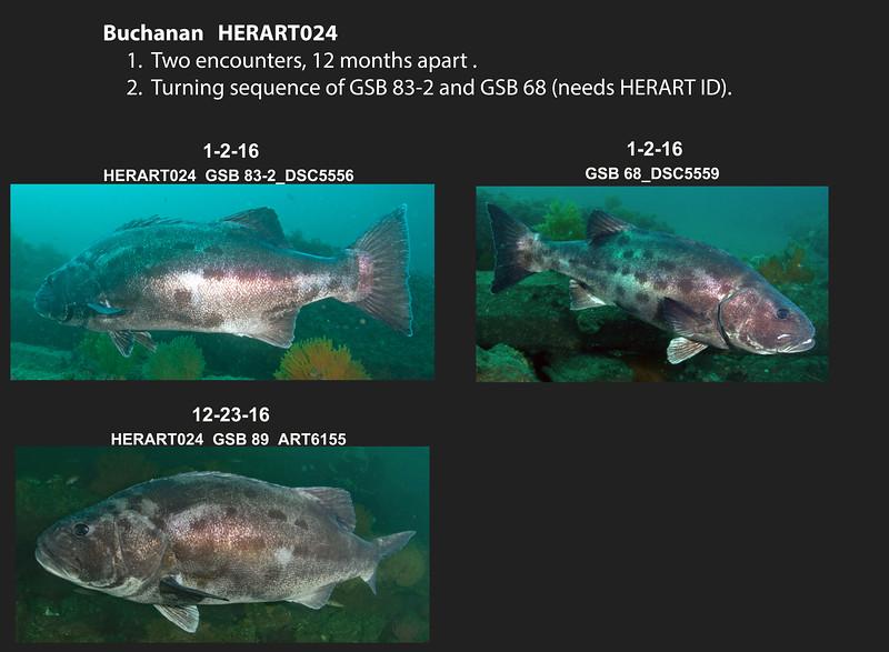 HERART024