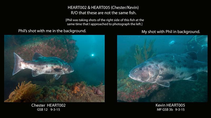 HERART002 and HERART005