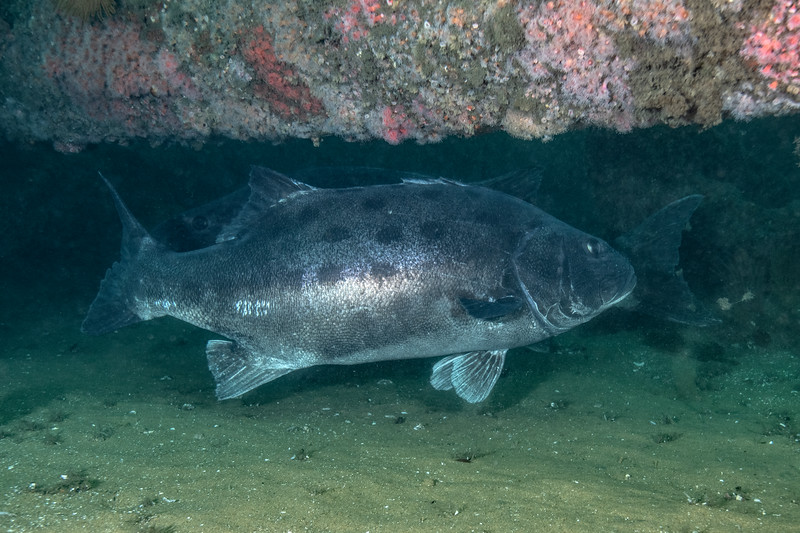 Spotting GSB 285<br /> GSB 321<br /> Spongehenge