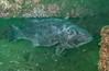 GSB 188<br /> Spongehenge, Hermosa Artificial Reef, Los Angeles County, California