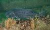 GSB 189<br /> Spongehenge, Hermosa Artificial Reef, Los Angeles County, California