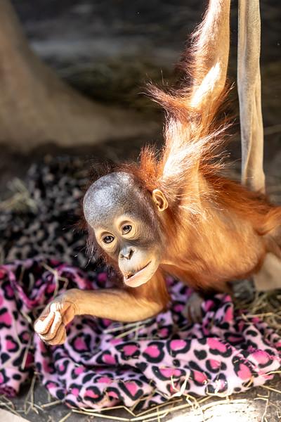 Erie Zoo April 24, 2019 016