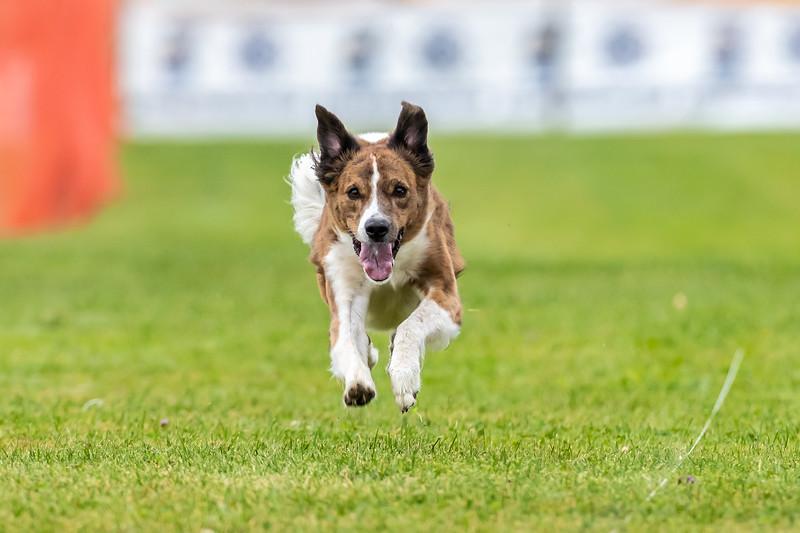 ESC Dogs 031 September 18, 2021
