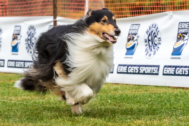 ESC Dogs 001 September 18, 2021
