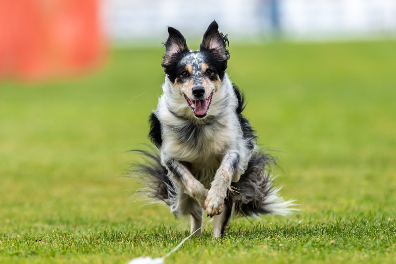 ESC Dogs 036 September 18, 2021