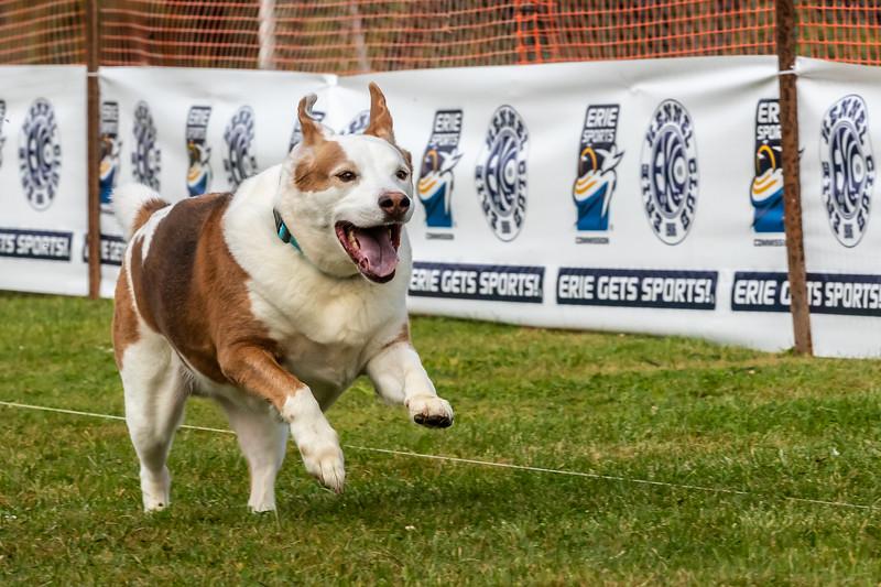 ESC Dogs 011 September 18, 2021