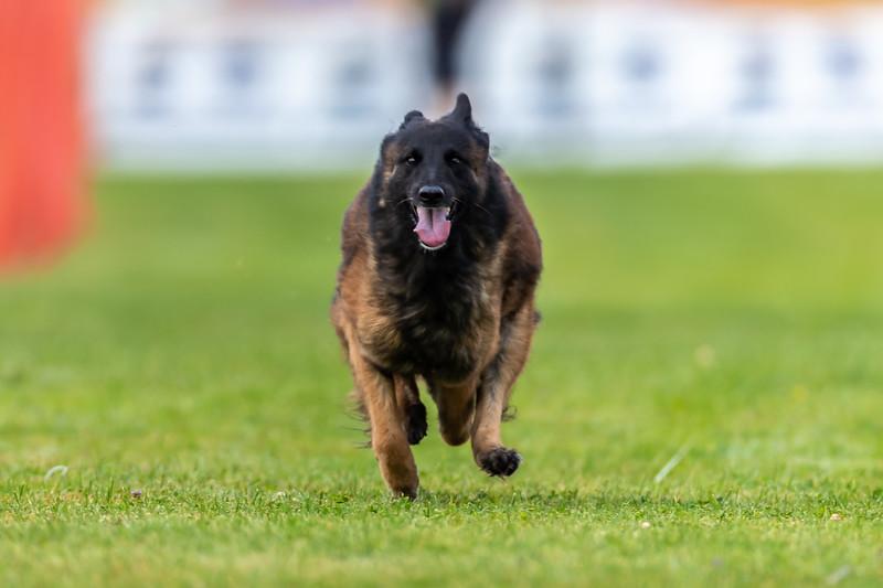 ESC Dogs 015 September 18, 2021