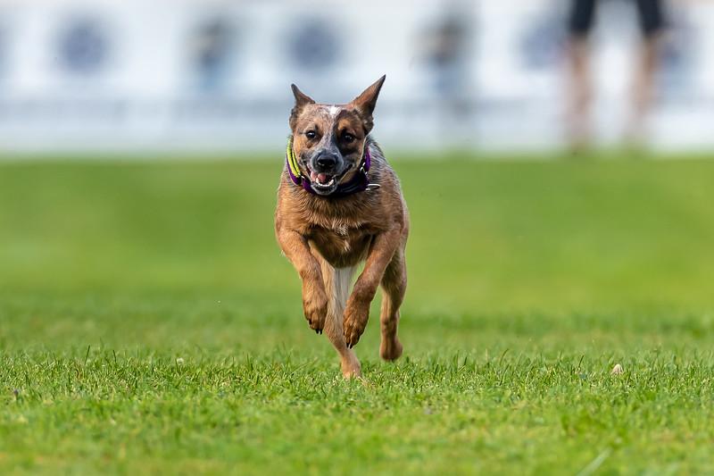 ESC Dogs 018 September 18, 2021