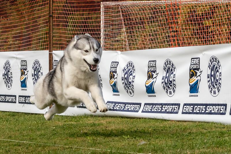 ESC Dogs 008 September 18, 2021