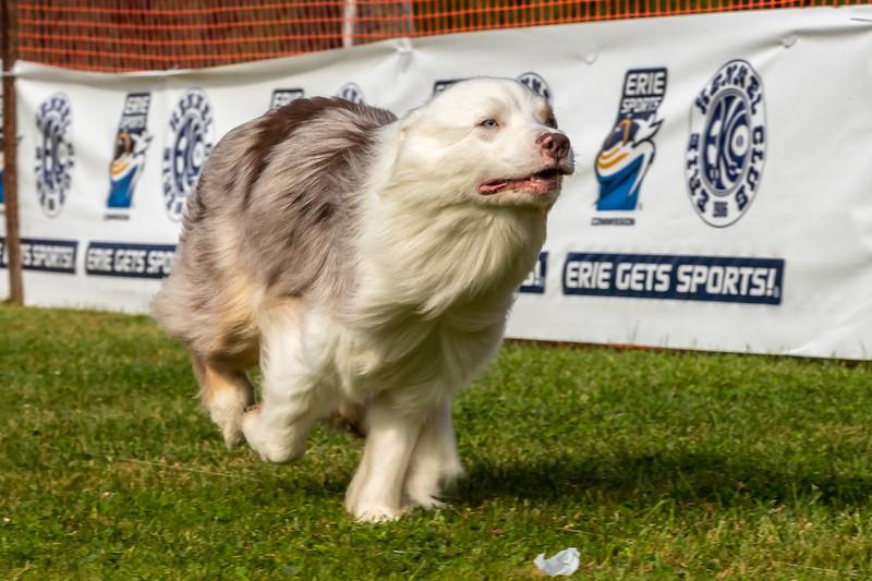 ESC Dogs 005 September 18, 2021