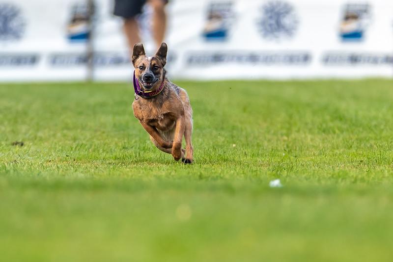 ESC Dogs 016 September 18, 2021