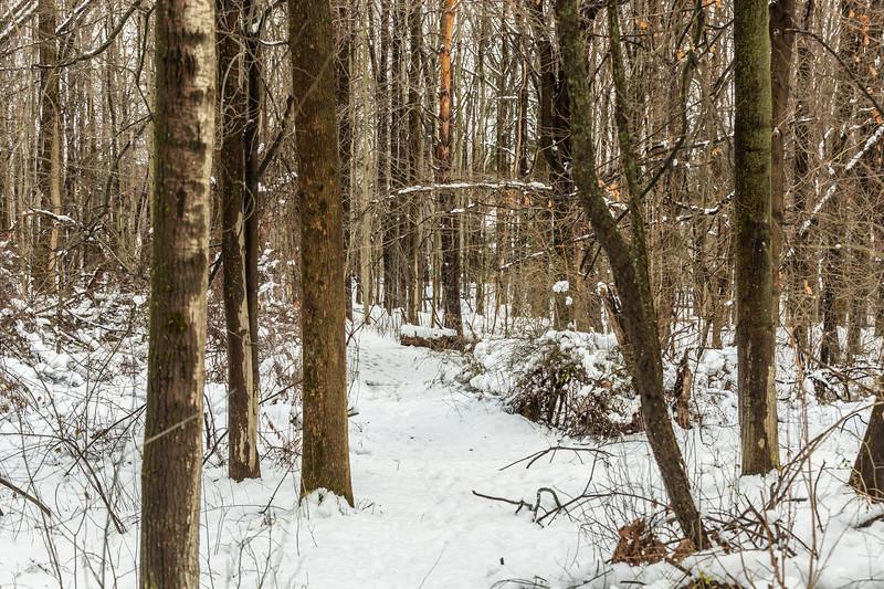 Asbury Woods 004 December 02, 2020