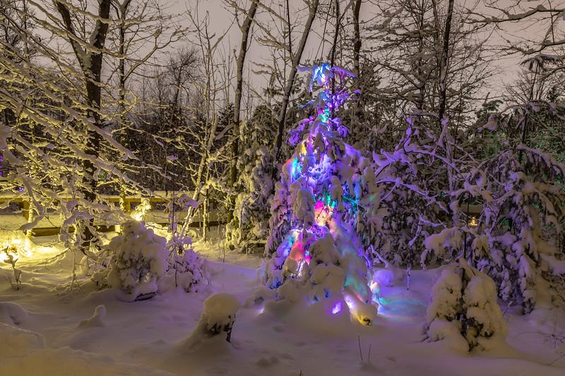 Asbury Woods 033 December 26, 2020