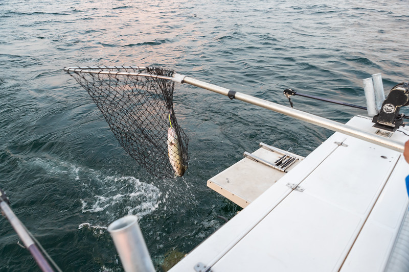 Visit Erie Fishing Charter September 21, 2019 004