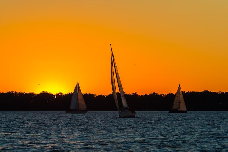 Sail Boat Race 251