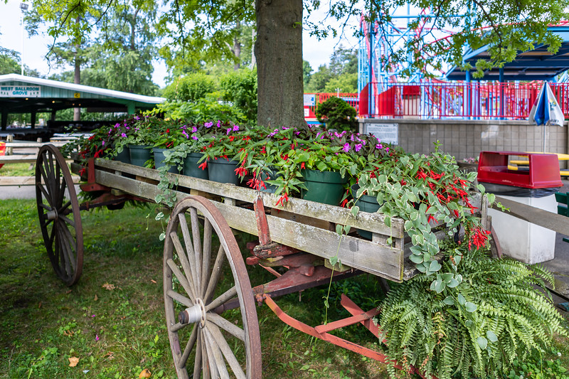 Waldameer Flowers July 23, 2019 039