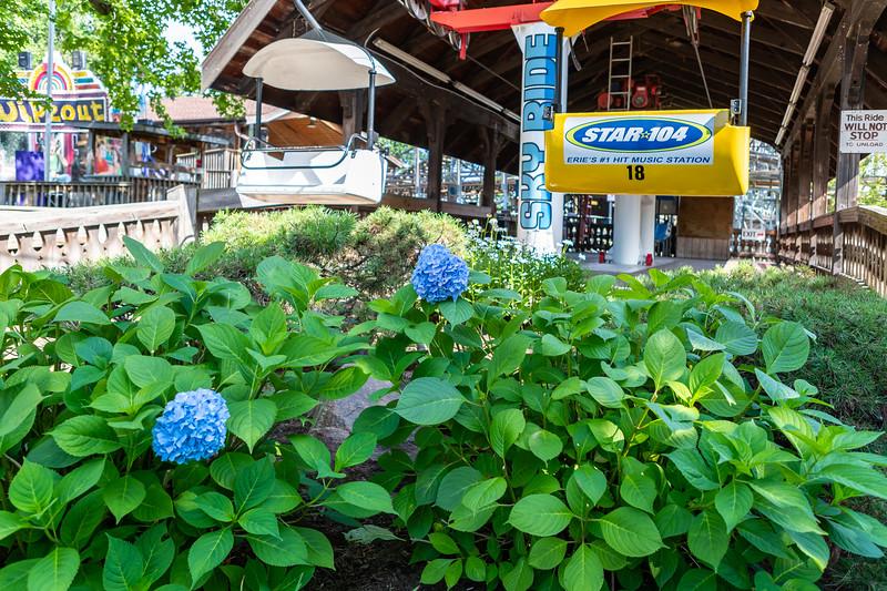 Waldameer Flowers July 23, 2019 019