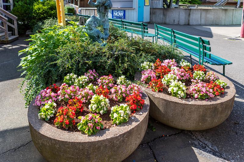 Waldameer Flowers July 23, 2019 023