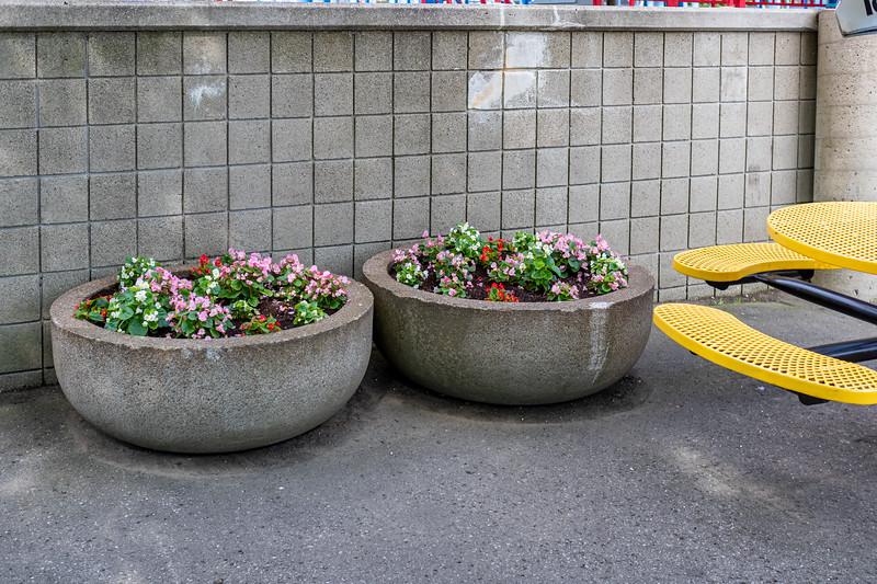 Waldameer Flowers July 23, 2019 038