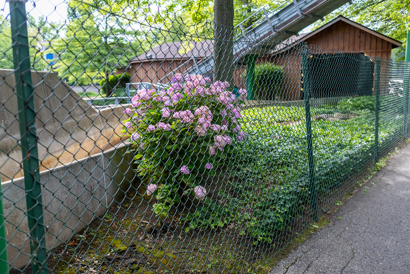 Waldameer Flowers July 23, 2019 041