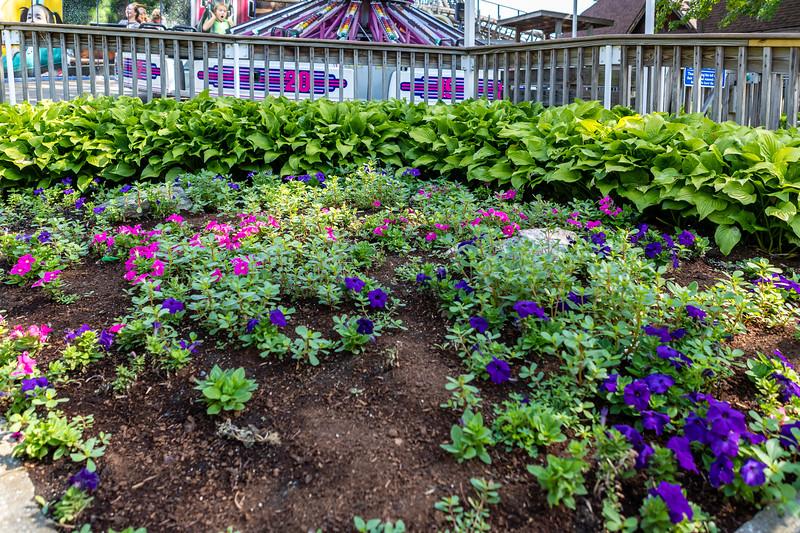 Waldameer Flowers July 23, 2019 021