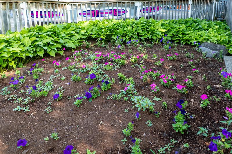 Waldameer Flowers July 23, 2019 020